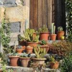 wunderschöne Kakteen und Kräuter sind im Garten verstreut