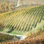 Italienische Weine und Marketing …