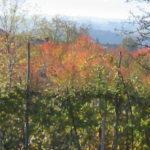 besonders schön ist das Piemont im Herbst