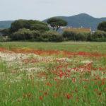 Toskana - meine zweite Heimat