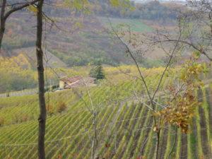 Barolo Weinberge im Langhe Tal Piemont