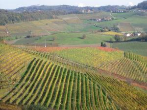 Weinberge Piemont im Herbst rund um Barolo, Novello, La Morra
