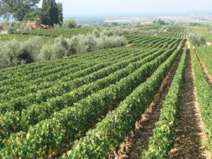 Das Weingut Ornellaia in Bolgheri – etwas ganz Besonderes – 1. Teil
