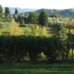 Toskana im Oktober perfekte Reisezeit