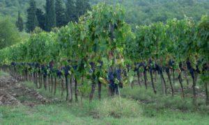 Ein wundervoller Ausflug ins Chianti Gebiet im Spätsommer