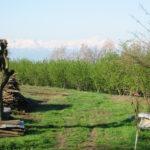 traumhafter Blick vom Agriturismo Ca San Ponzio im Piemont.jpg