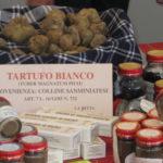 weisser Trueffel aus San Miniato auf dem Trueffel Markt in Montaione Toskana