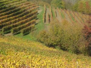 Piemont Barolo Weinberge im November