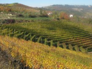 Essen und Trinken im Piemont: November ist einfach der beste Monat