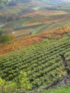 traumhafter November Tag im Piemont Barolo