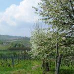 Piemont im Fruehling wundervoll