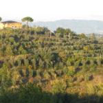 wunderschoene Toskana bei Palaia zwischen Pisa und Florenz