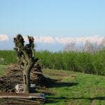 Piemont Barolo im Fruehling