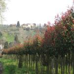 Toskana im Fruehling