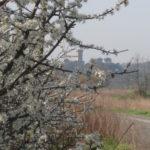 Vicopisano Toskana im Fruehling