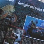 Eine echte Beruehmtheit in Italien: Krake Paul