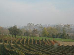 Piemont Weinberge im November