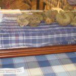 Die ersten weißen Alba Trüffel aus dem Piemont sind da