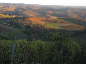Nebbiolo Trauben im Piemont