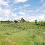 Besondere Weinprobe in der Toskana: Bioweine mit deutschem Charme