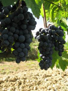 Weinprobe Chianti Toskana