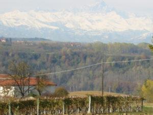 Spitzenweine Piemont