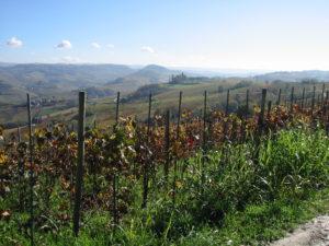 Top Barolo Weine Piemont