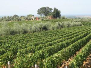 Marketing für Weine: Toskana gegen Piemont