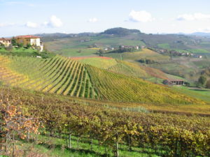 November beste Trueffelzeit Piemont